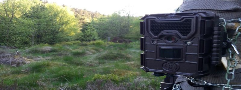 Bushnell Trophy Trail Cam Review