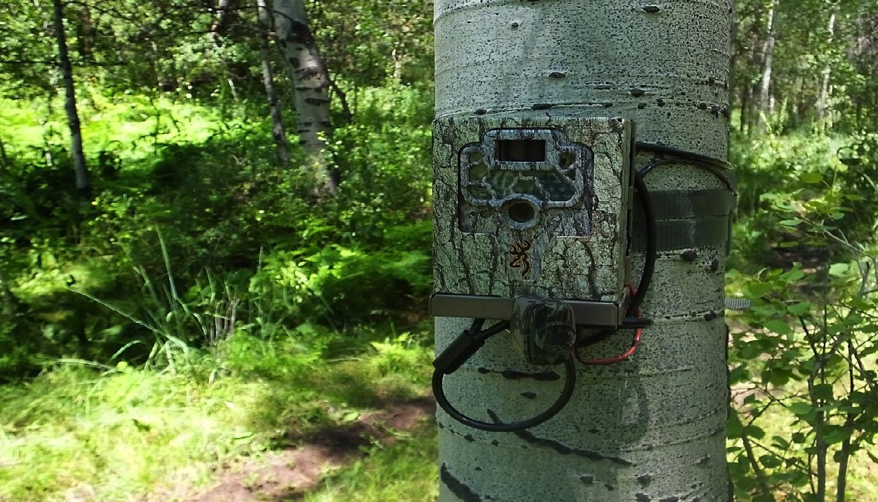 How To Choose Best Trail Camera