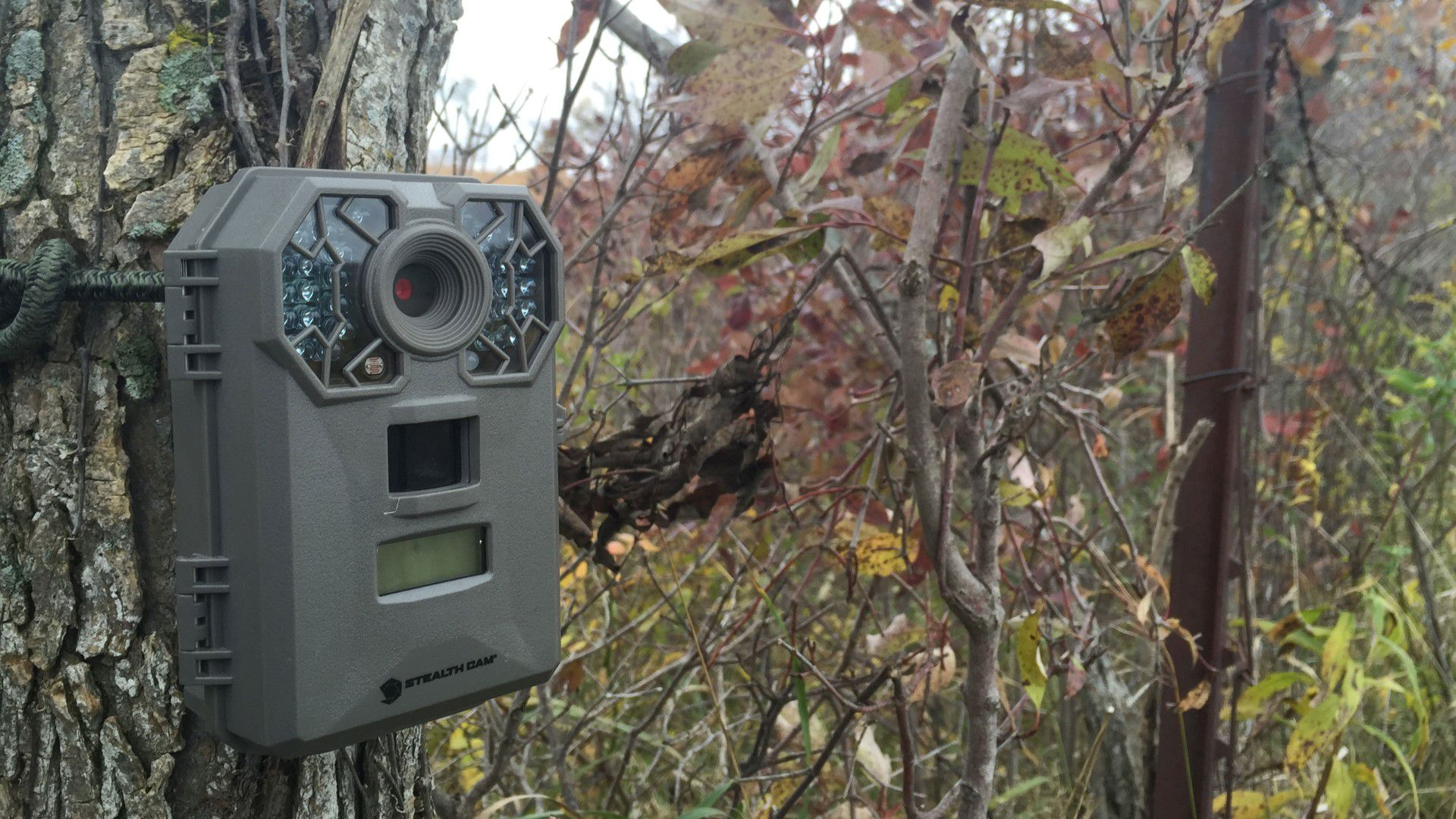 Features Of Trail Camera
