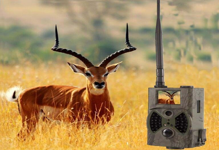 Outdoor HC-300M Digital Trail Camera Review