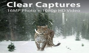 REXING Woodlens H1 HD 16MP Trail Camera