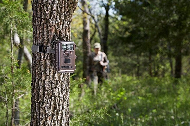 Best Trail Camera Buying Guide