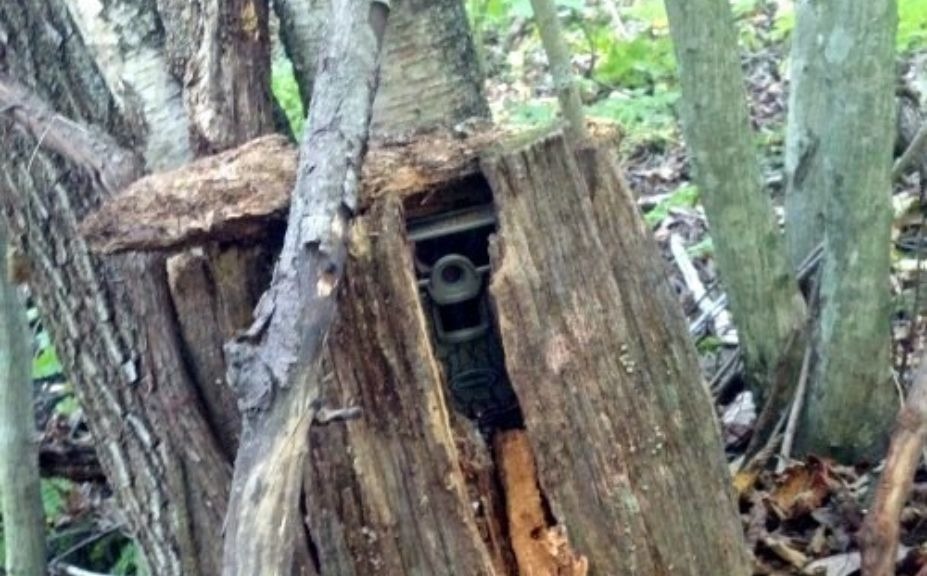 Best Game Camera Buying Guide