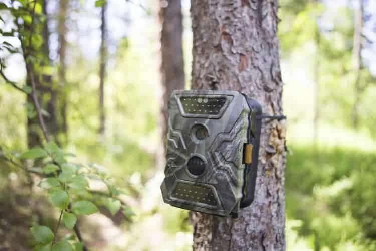 Infrared Or Flash Trail Cameras
