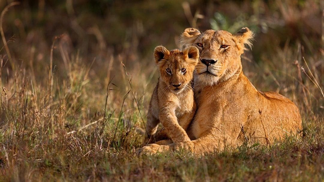 Best Wildlife Tips To Survive More