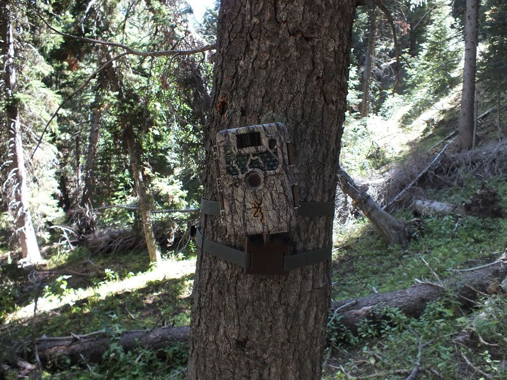 Best Features Of Trail Camera