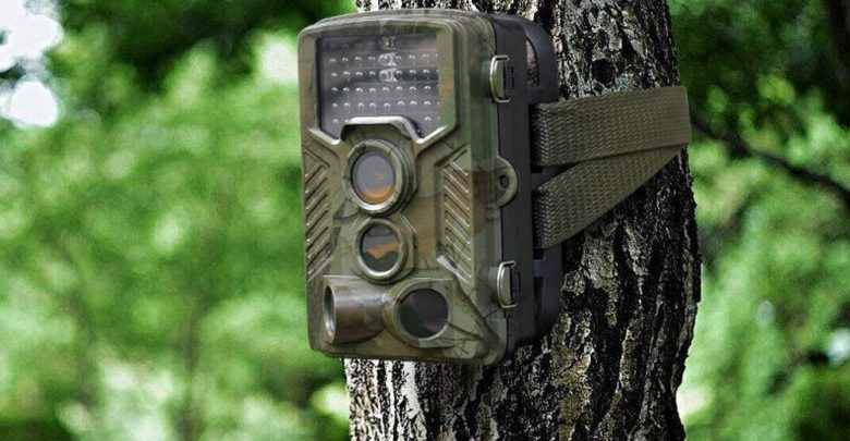 Trail Cameras For Wildlife Photography