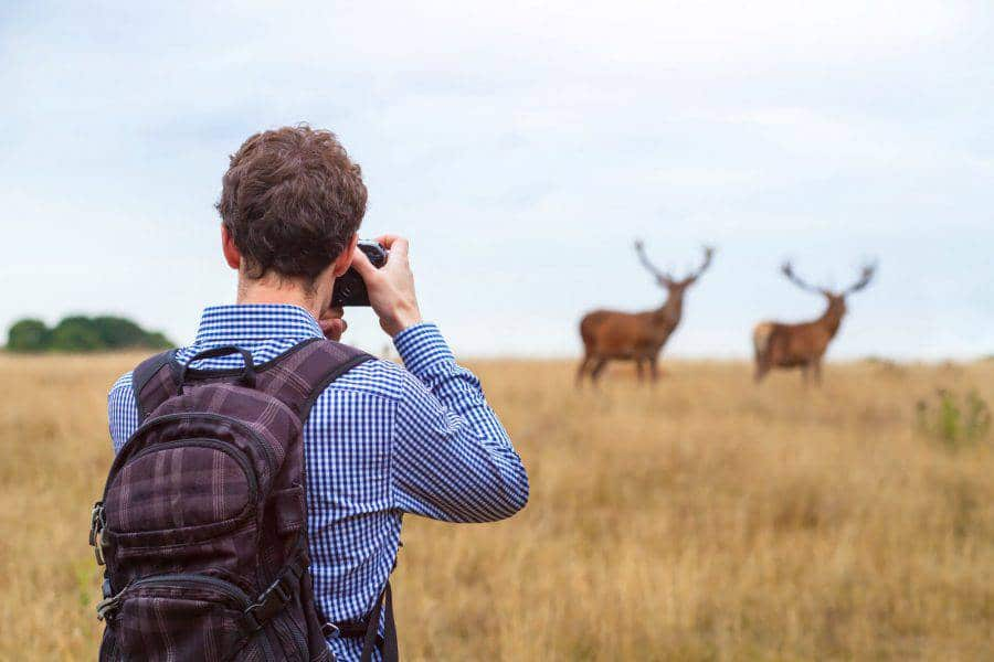 What Is Wildlife Photography
